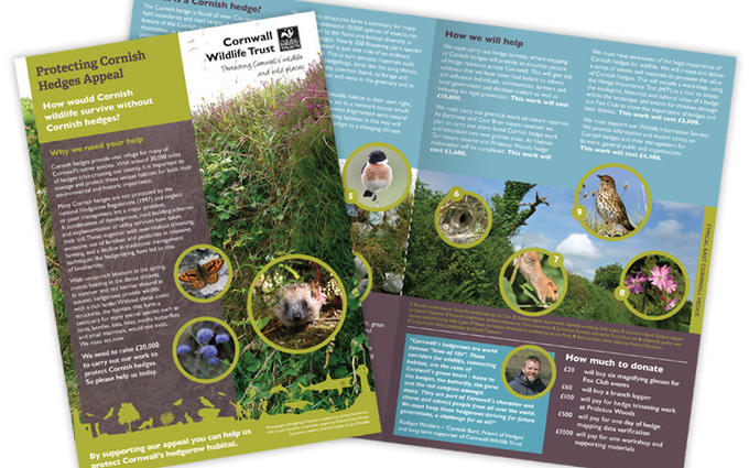 Cornwall Wildlife Trust Hedges Appeal